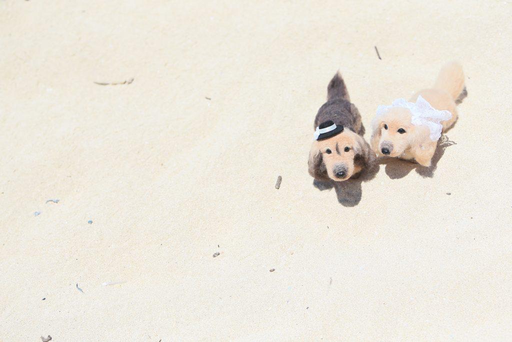 015 ハワイ 犬 フォト小物 Photo by TAKA (AFLOAT Hawaii)