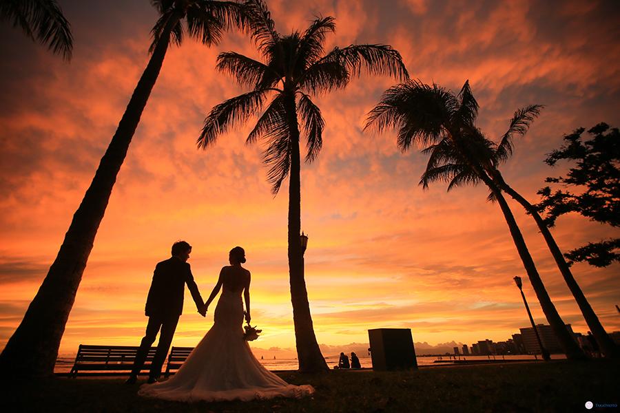 ハワイ パームツリー 撮影 人気