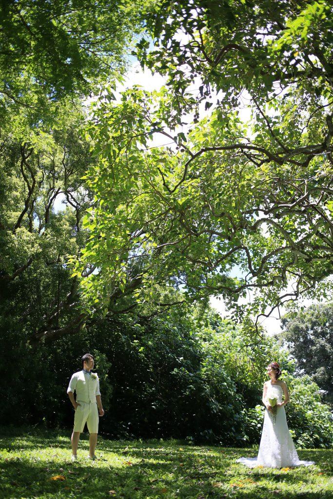 ヌアヌバレーパーク ハワイ大自然
