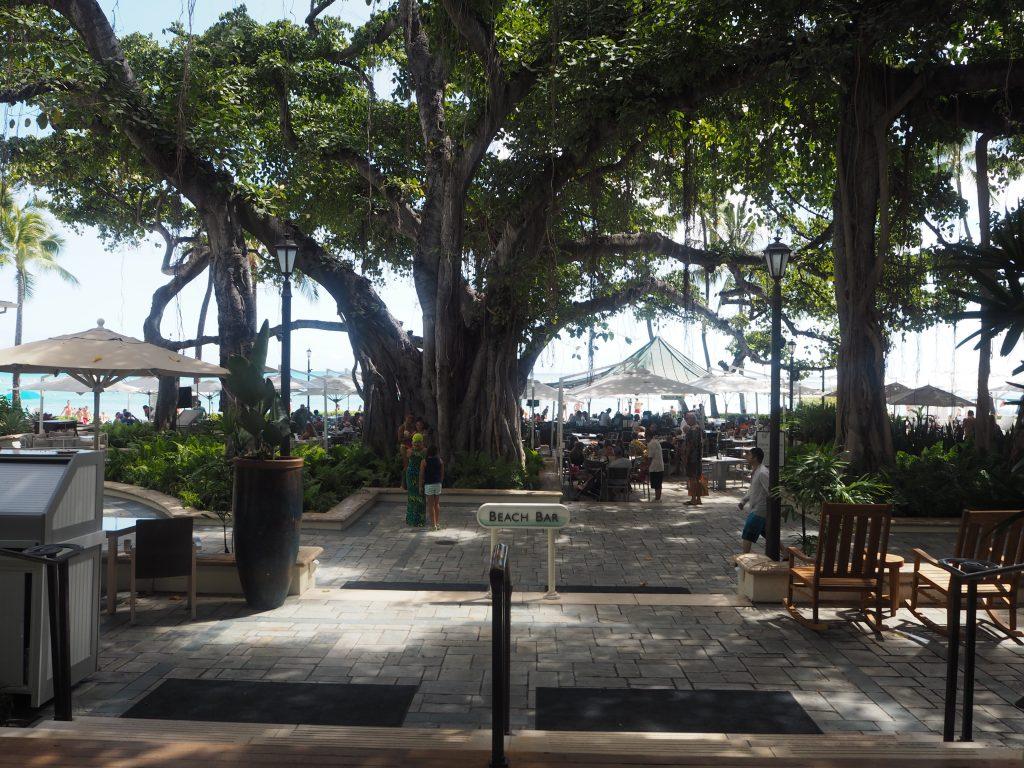 モアナサーフライダーホテル 中庭 バニヤンツリー