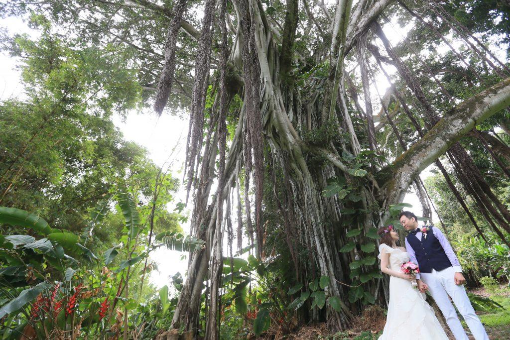 ハワイ 自然の魅力