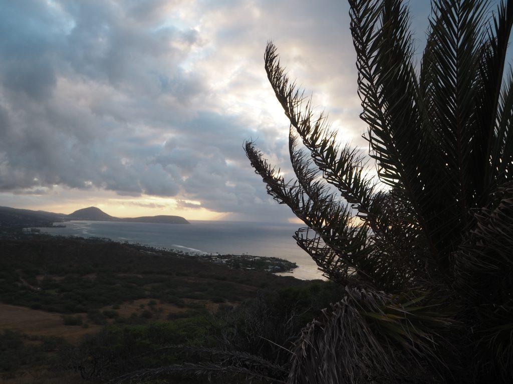 パームツリー ハワイ撮影