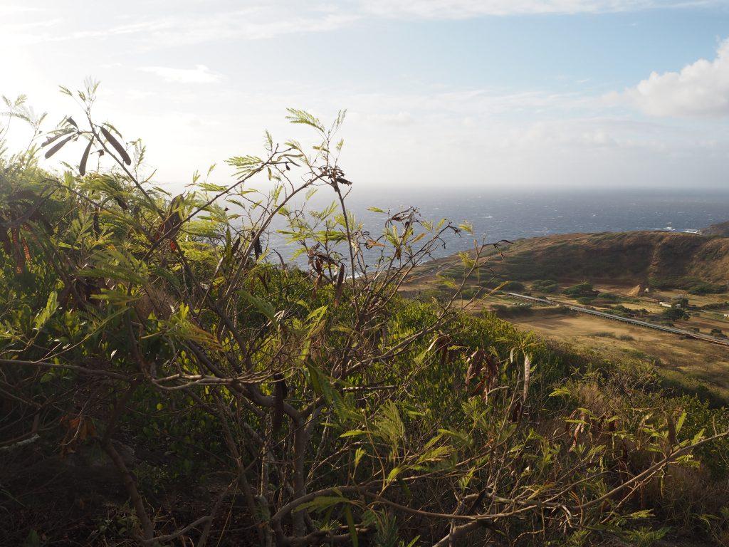 ハワイ 景色 人気 おすすめ