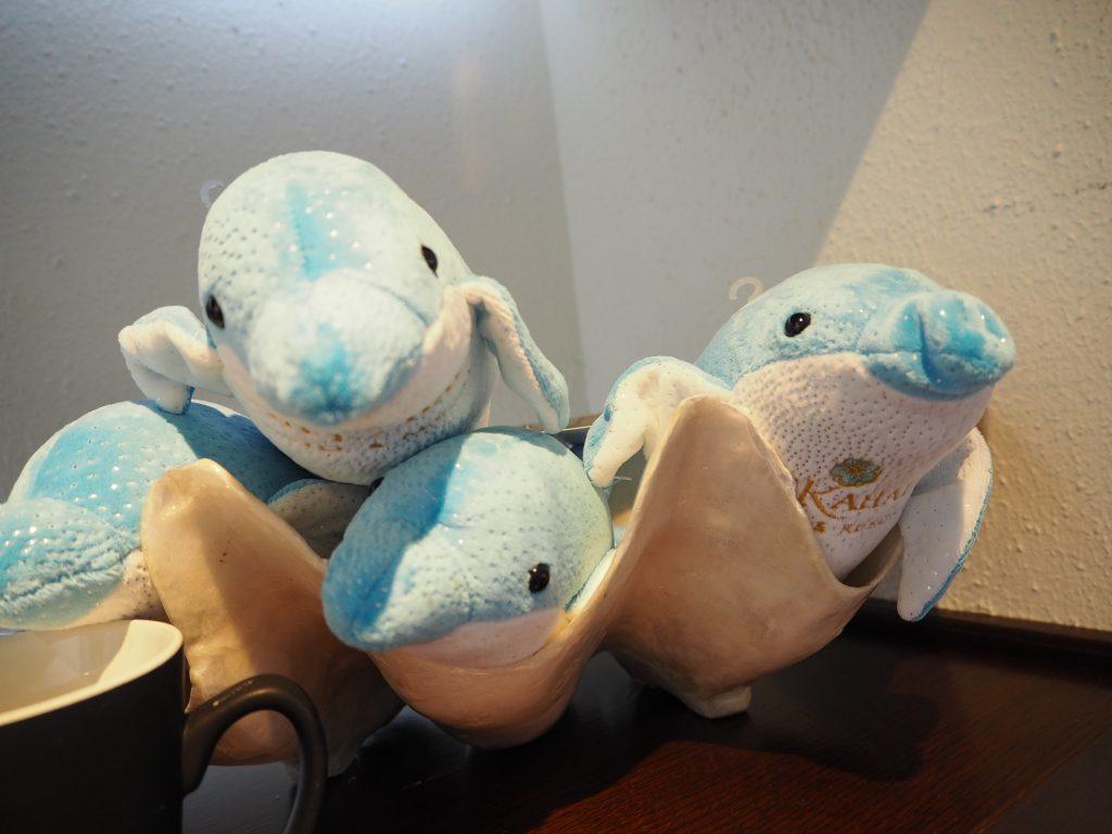 カハラホテル イルカ 泳げる お土産