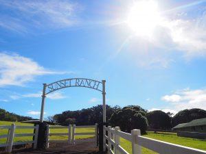 サンセットランチ フォトウェディング 撮影 挙式 ハワイ