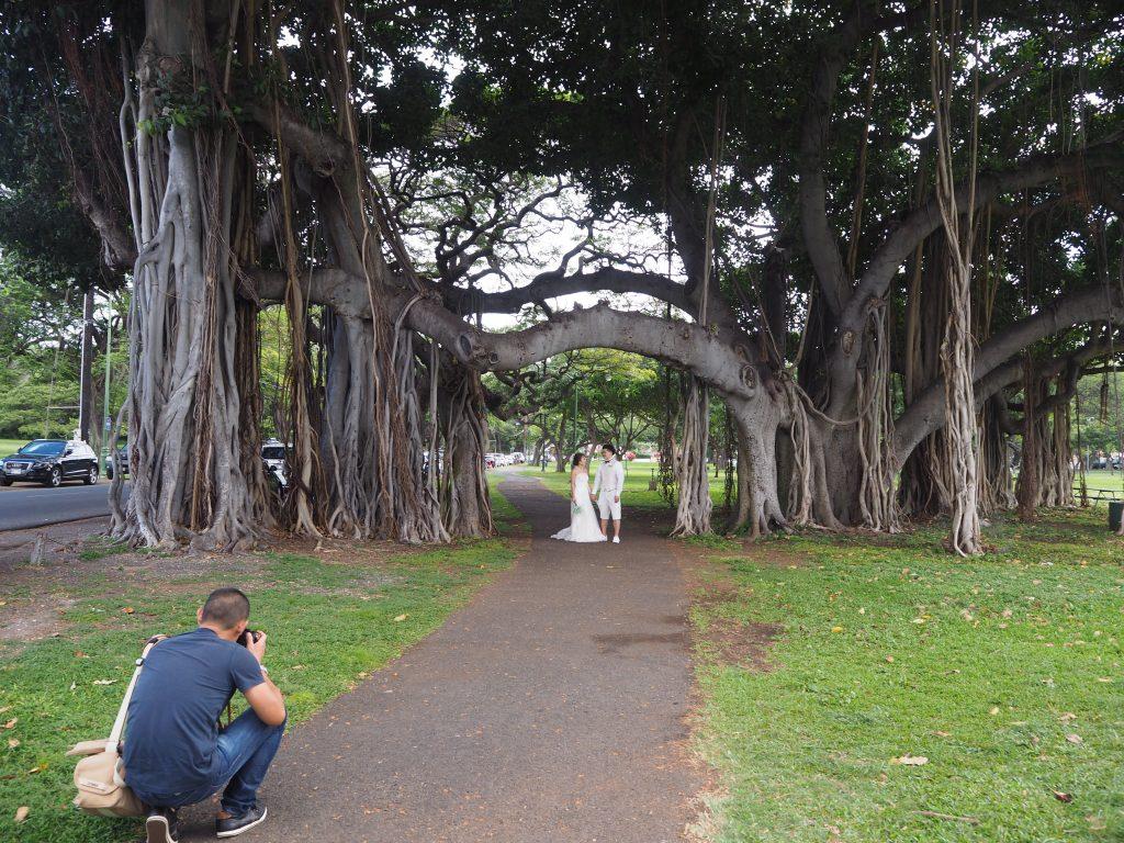 カピオラニ公園 ハワイ 撮影スポット