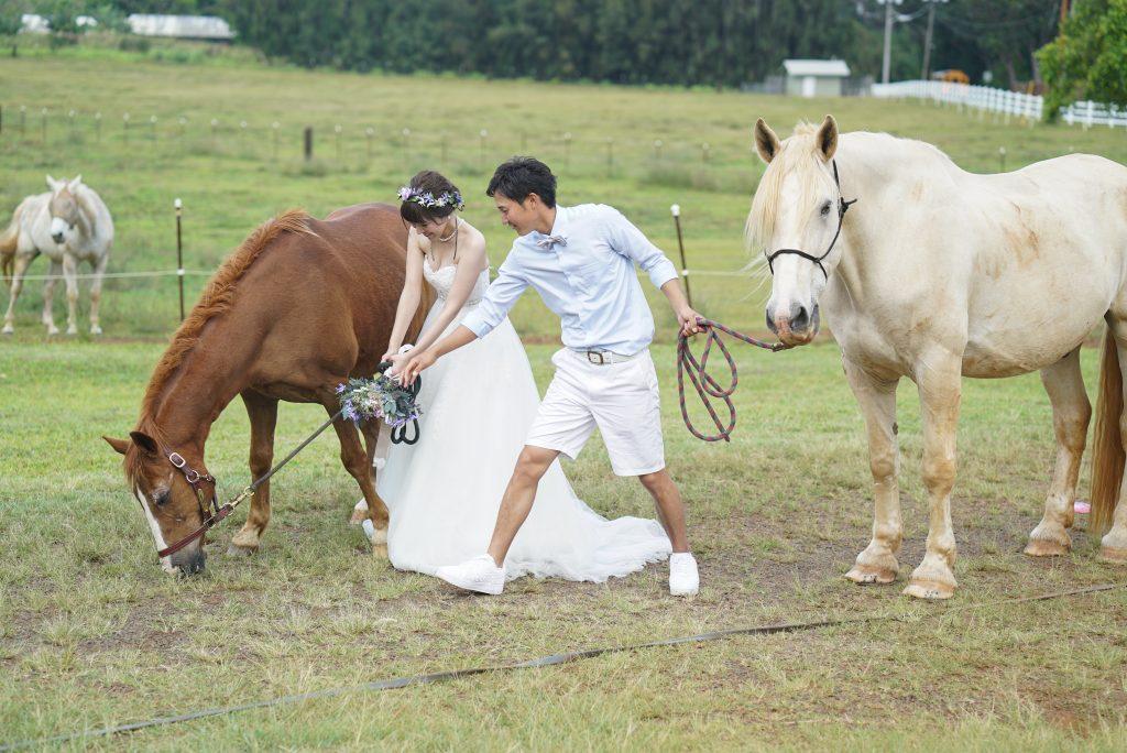 可愛い 馬 サンセットランチ ハワイフォトウェディング