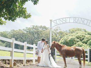 ハワイフォトウェディング 馬 サンセットランチ