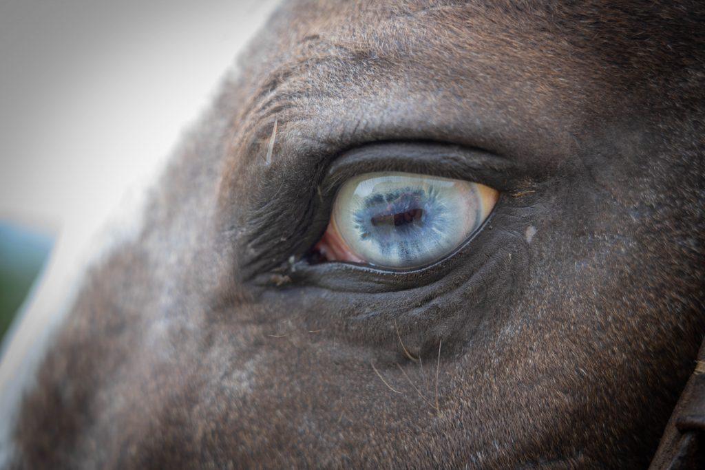 馬 目 ブルー