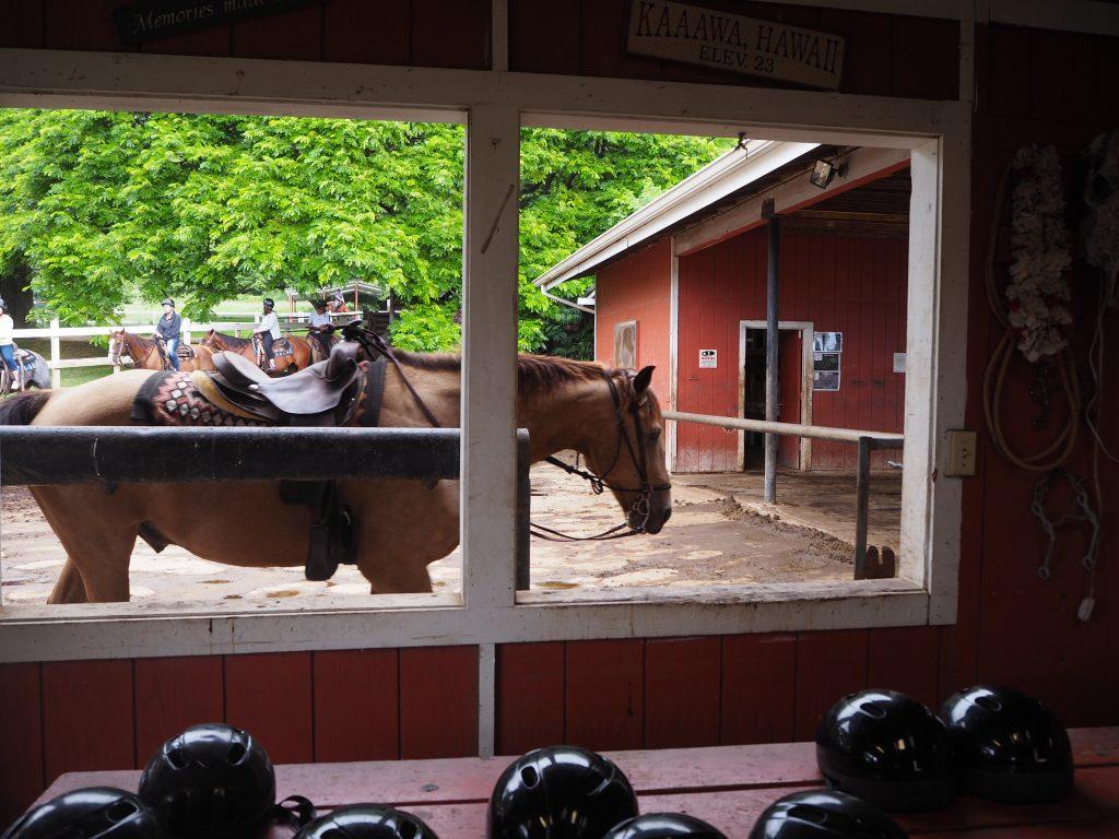 ハワイ 乗馬 クアロアランチ