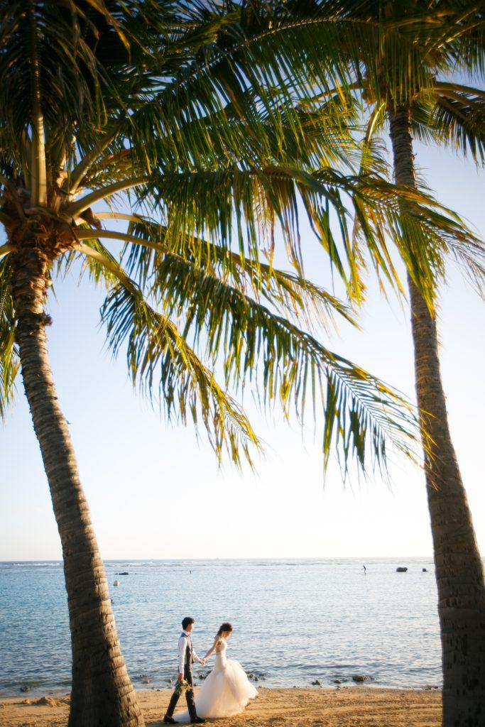 ハワイ やしの木 海外撮影