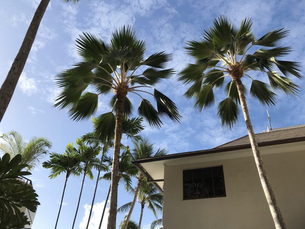 ハワイ ハレクラニ中庭